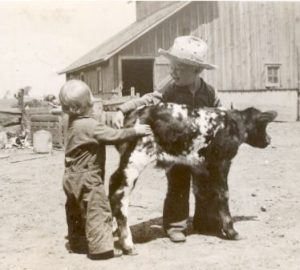 1942 Daddy and calf
