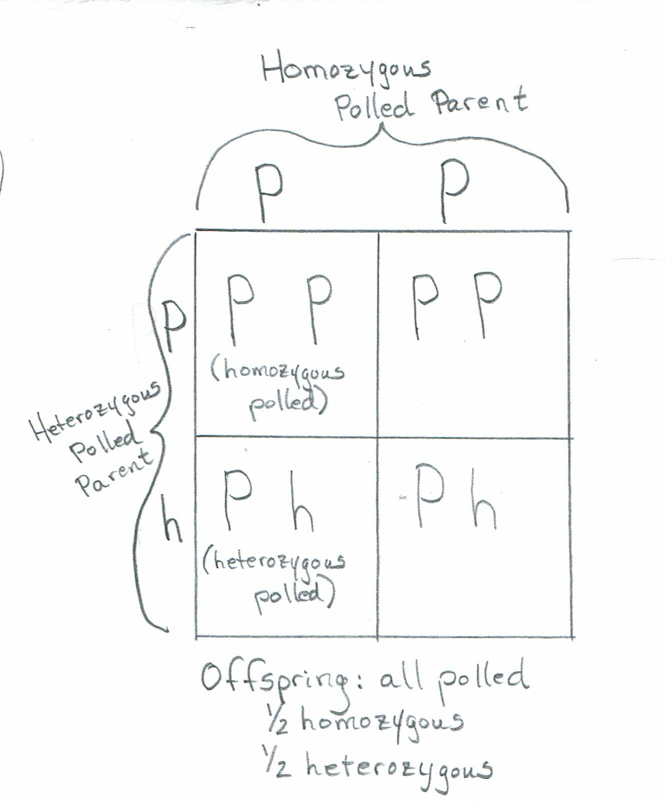 Ph, PP