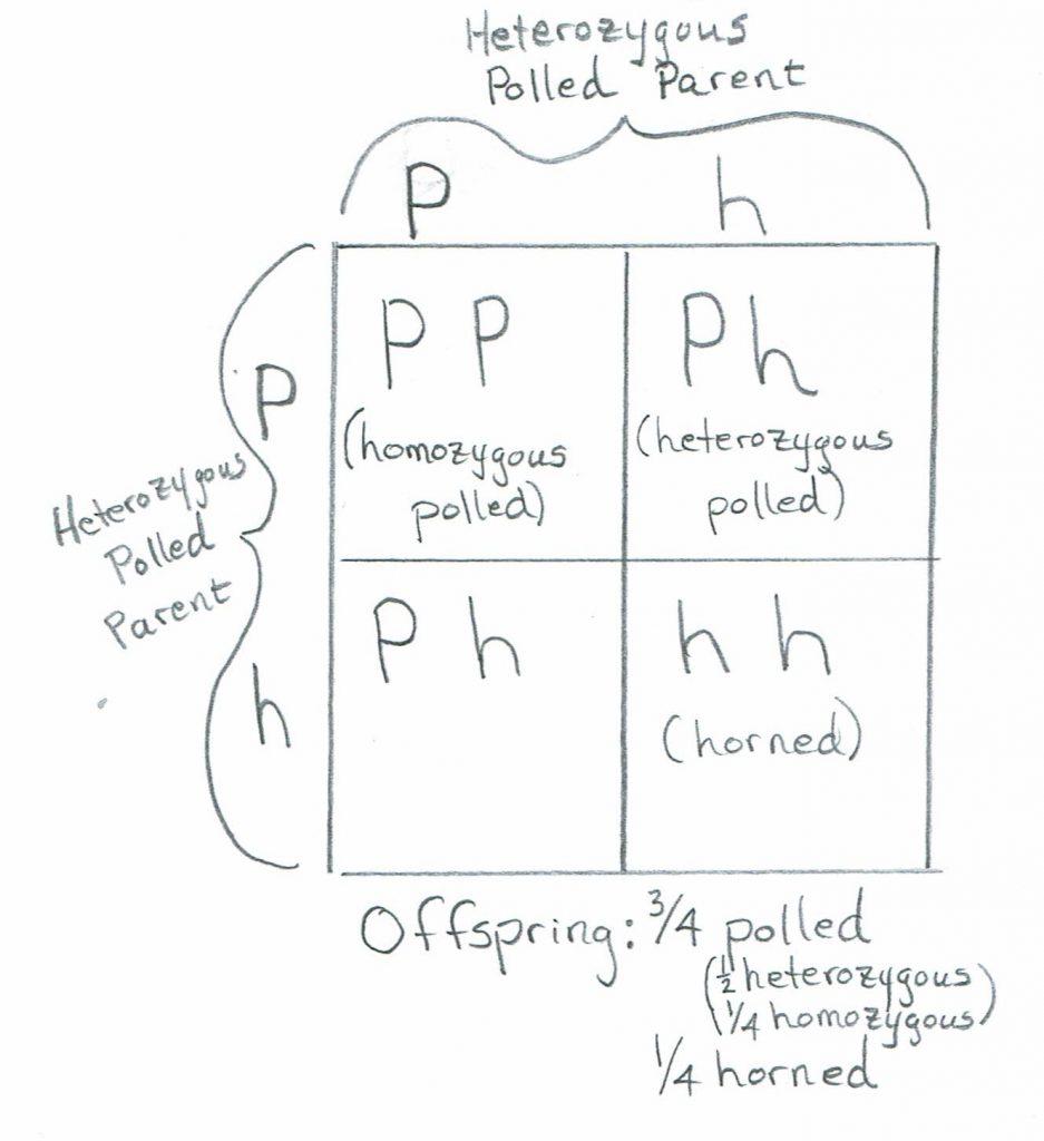 Ph, Ph