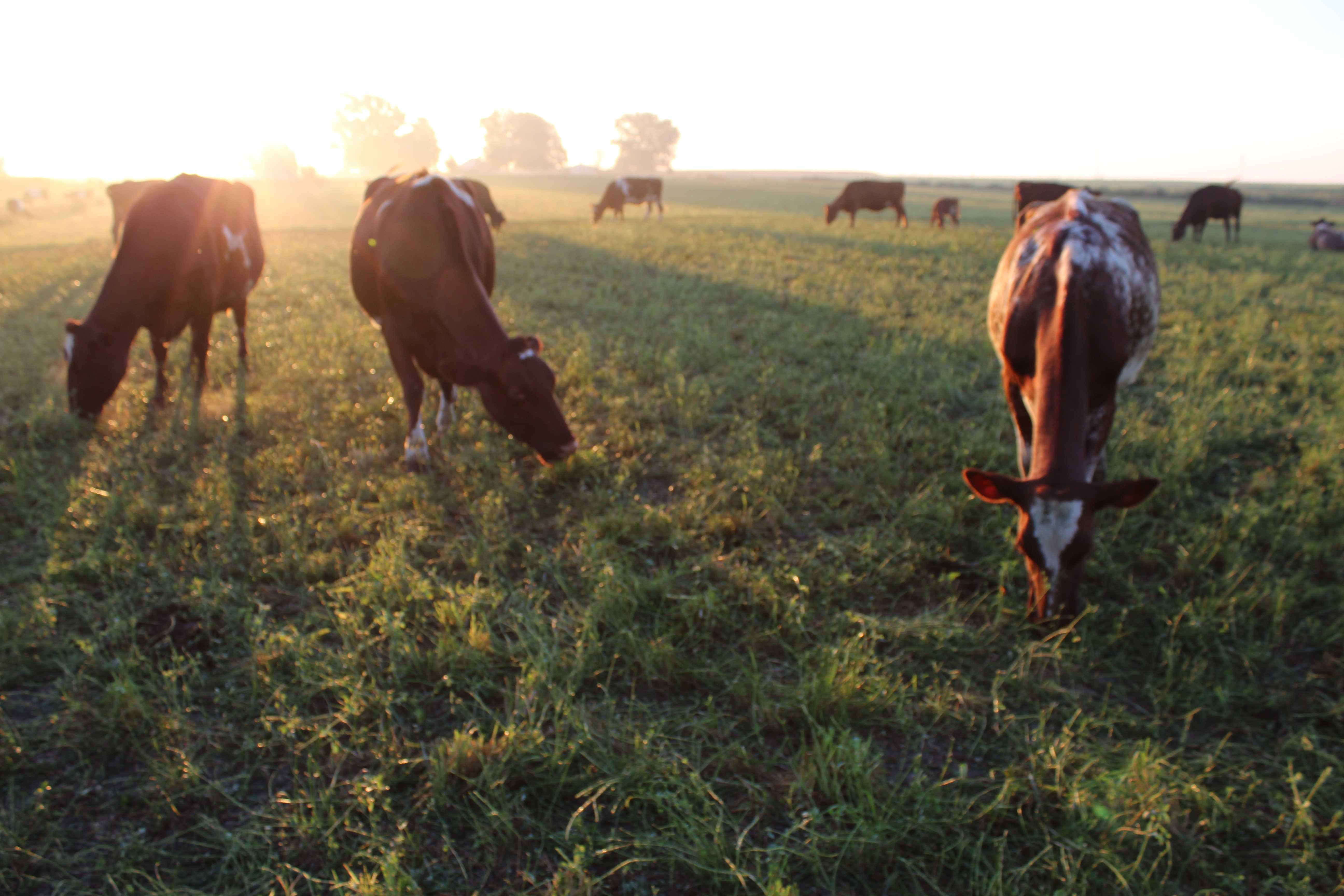 Fall Grazing—Saving the Best for Last